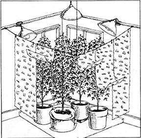 comment faire pousser du cannabis en interieur pour debutant. Black Bedroom Furniture Sets. Home Design Ideas